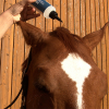 Sensicellhorse Hair Activator Energize kaufen
